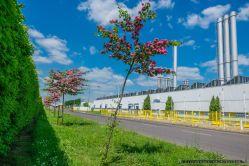WIOSNA-SPRING_TYCHY_16-05-2015_fot_Ireneusz-KAZMIERCZAK.