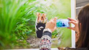 """Wernisaz fotografii """"Zywy album przyrody"""" autorstwa czlonkow Zwiazku Polskich Fotografow Przyrody Okregu Slaskiego_21-05-2016_Muzeum Slaskie w Katowicach_FOT_IRENEUSZ KAZMIERCZAK."""